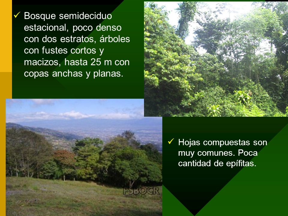 Bosque semideciduo estacional, poco denso con dos estratos, árboles con fustes cortos y macizos, hasta 25 m con copas anchas y planas. Hojas compuesta
