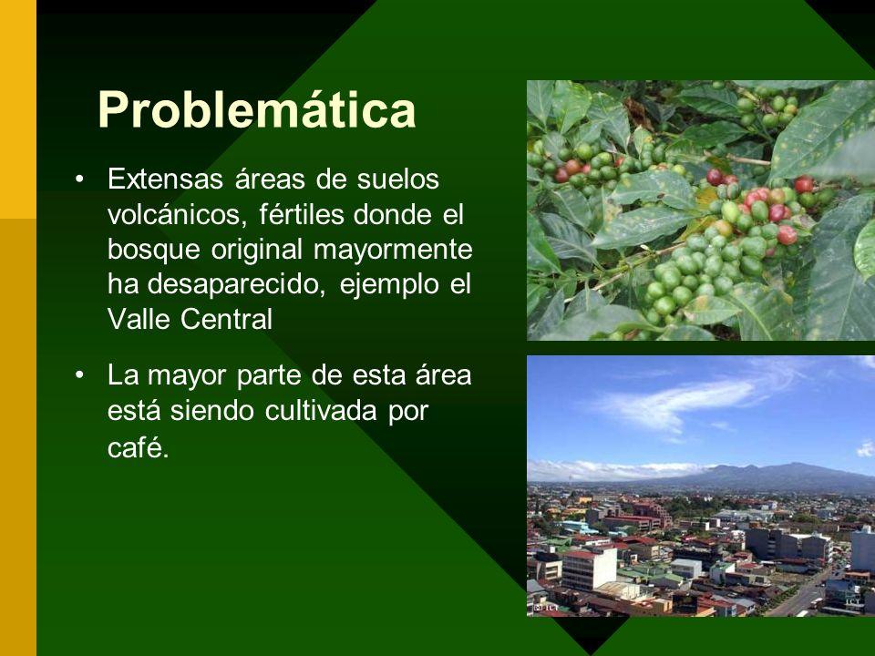 Problemática Extensas áreas de suelos volcánicos, fértiles donde el bosque original mayormente ha desaparecido, ejemplo el Valle Central La mayor part
