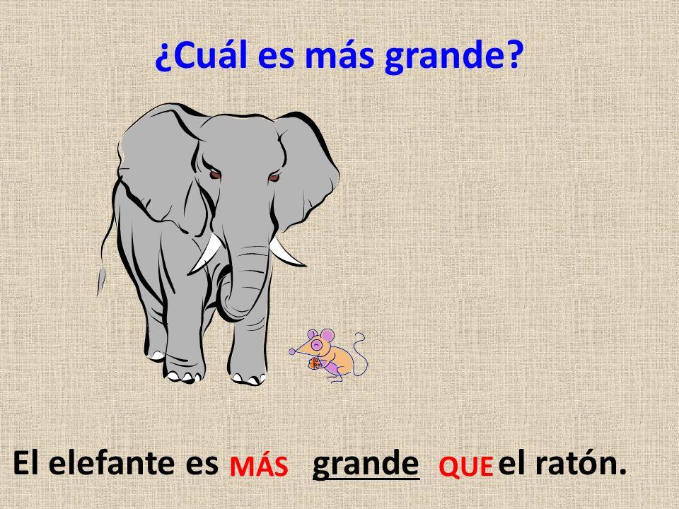 ¿Cuál es más grande? El elefante es grande el ratón. MÁS QUE