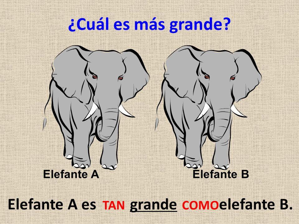 ¿Cuál es más grande? Elefante A es grande elefante B. TAN COMO Elefante AElefante B