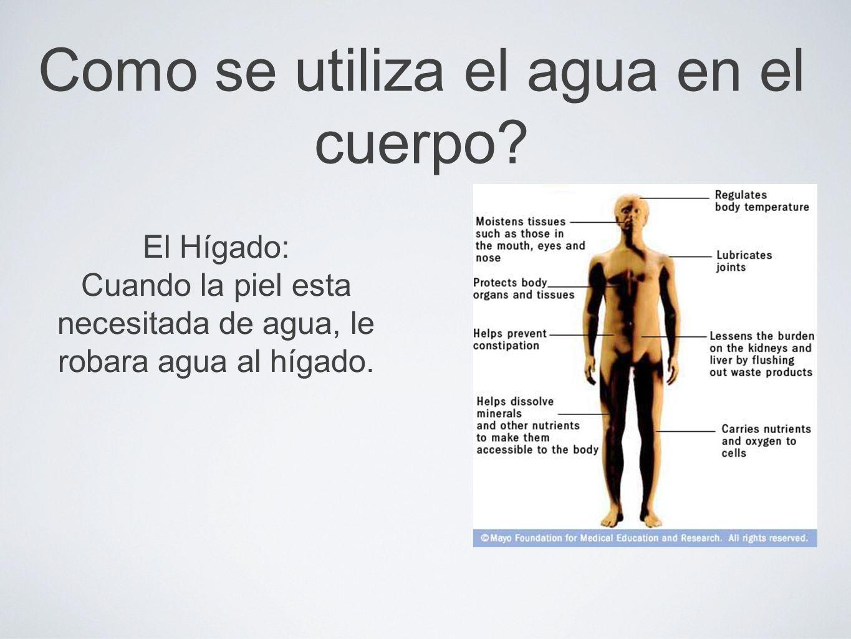 Como se utiliza el agua en el cuerpo.