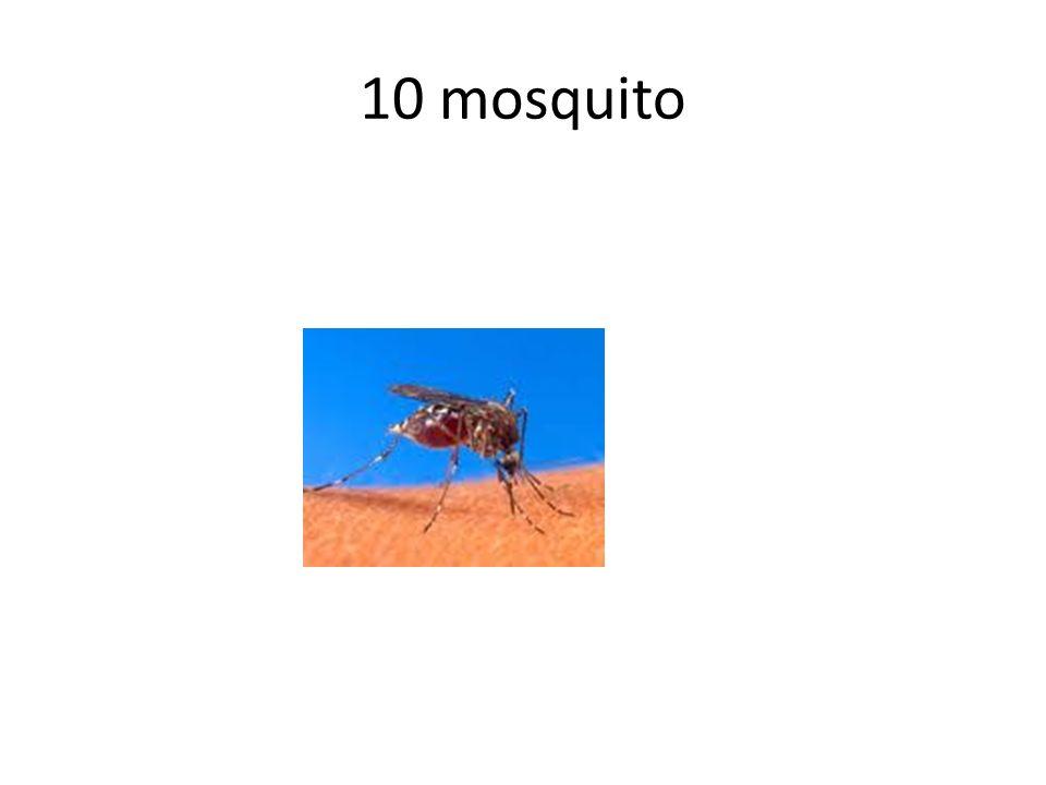 10 mosquito