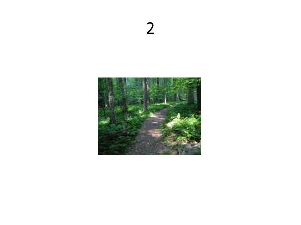 El comienzo de un camino o sendero para hacer una caminata.