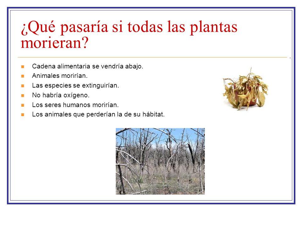 ¿Qué pasaría si todas las plantas morieran? Cadena alimentaria se vendría abajo. Animales morirían. Las especies se extinguirían. No habría oxígeno. L
