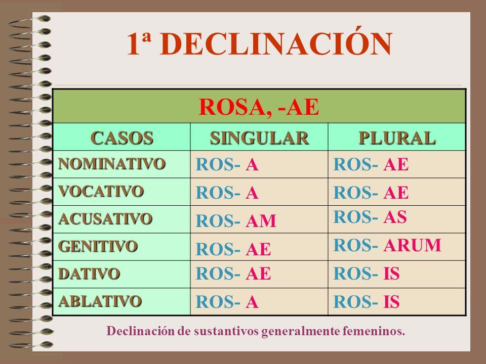 1ª DECLINACIÓN ROSA, -AE CASOSSINGULARPLURAL NOMINATIVO VOCATIVO ACUSATIVO GENITIVO DATIVO ABLATIVO ROS- AM ROS- A ROS- AE ROS- IS ROS- ARUM ROS- AS Declinación de sustantivos generalmente femeninos.