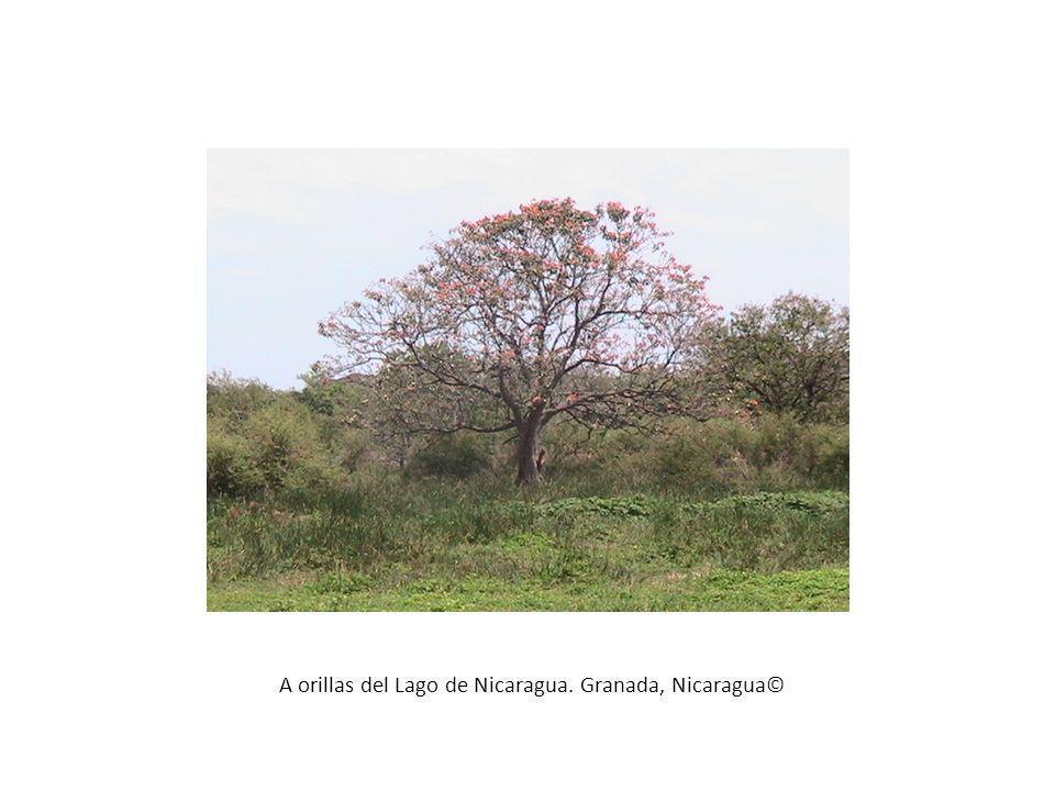 A orillas del Lago de Nicaragua. Granada, Nicaragua©