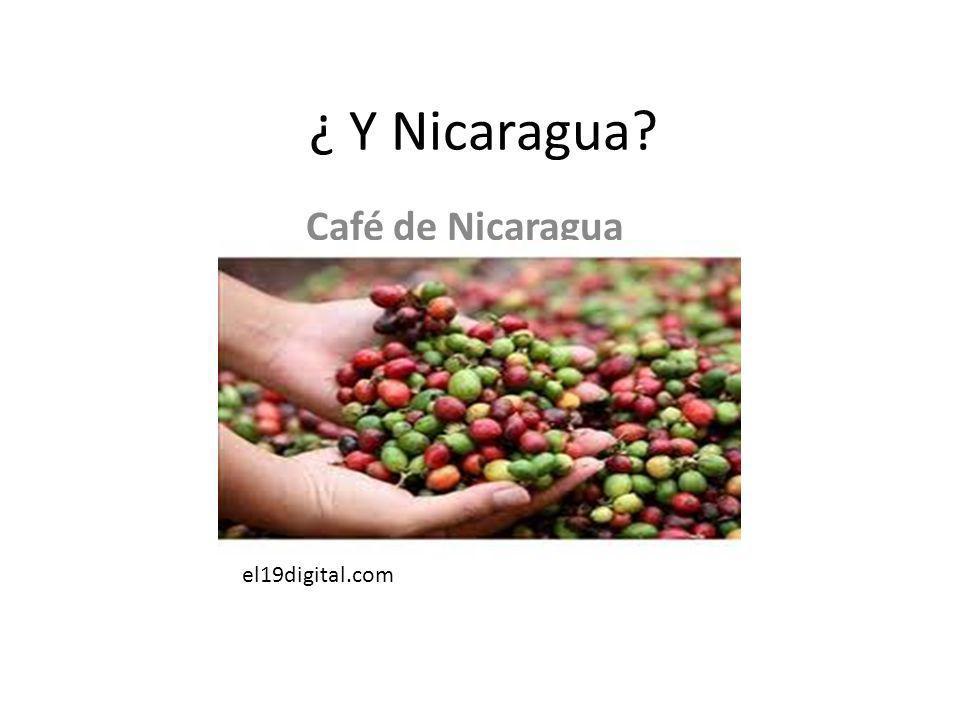 ¿ Y Nicaragua? Café de Nicaragua el19digital.com