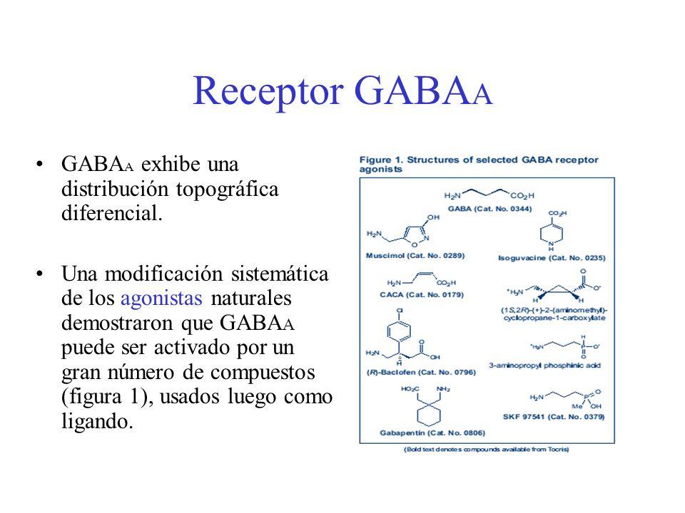 Receptor GABA A GABA A exhibe una distribución topográfica diferencial. Una modificación sistemática de los agonistas naturales demostraron que GABA A