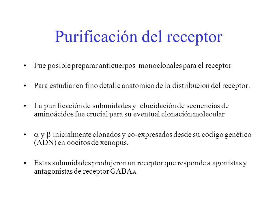 Purificación del receptor Fue posible preparar anticuerpos monoclonales para el receptor Para estudiar en fino detalle anatómico de la distribución de