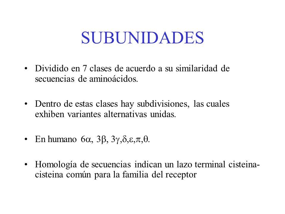 SUBUNIDADES Dividido en 7 clases de acuerdo a su similaridad de secuencias de aminoácidos. Dentro de estas clases hay subdivisiones, las cuales exhibe