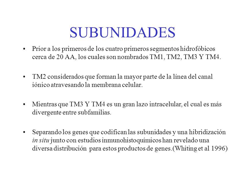 SUBUNIDADES Prior a los primeros de los cuatro primeros segmentos hidrofóbicos cerca de 20 AA, los cuales son nombrados TM1, TM2, TM3 Y TM4. TM2 consi