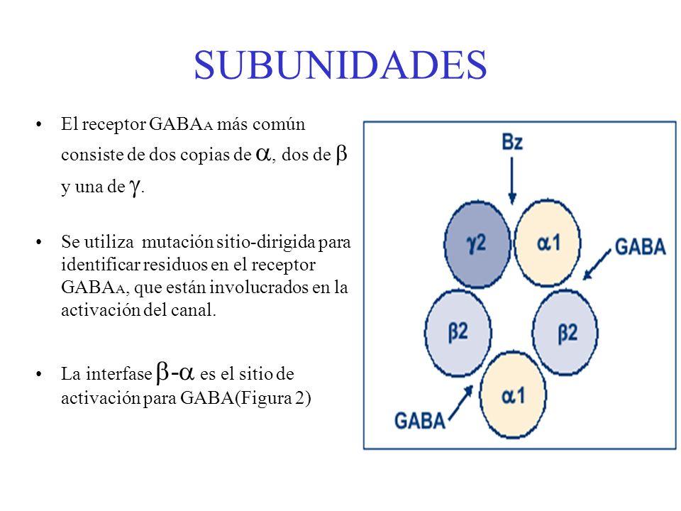 SUBUNIDADES El receptor GABA A más común consiste de dos copias de, dos de y una de. Se utiliza mutación sitio-dirigida para identificar residuos en e