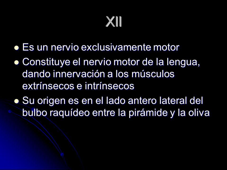 XII Es un nervio exclusivamente motor Es un nervio exclusivamente motor Constituye el nervio motor de la lengua, dando innervación a los músculos extr