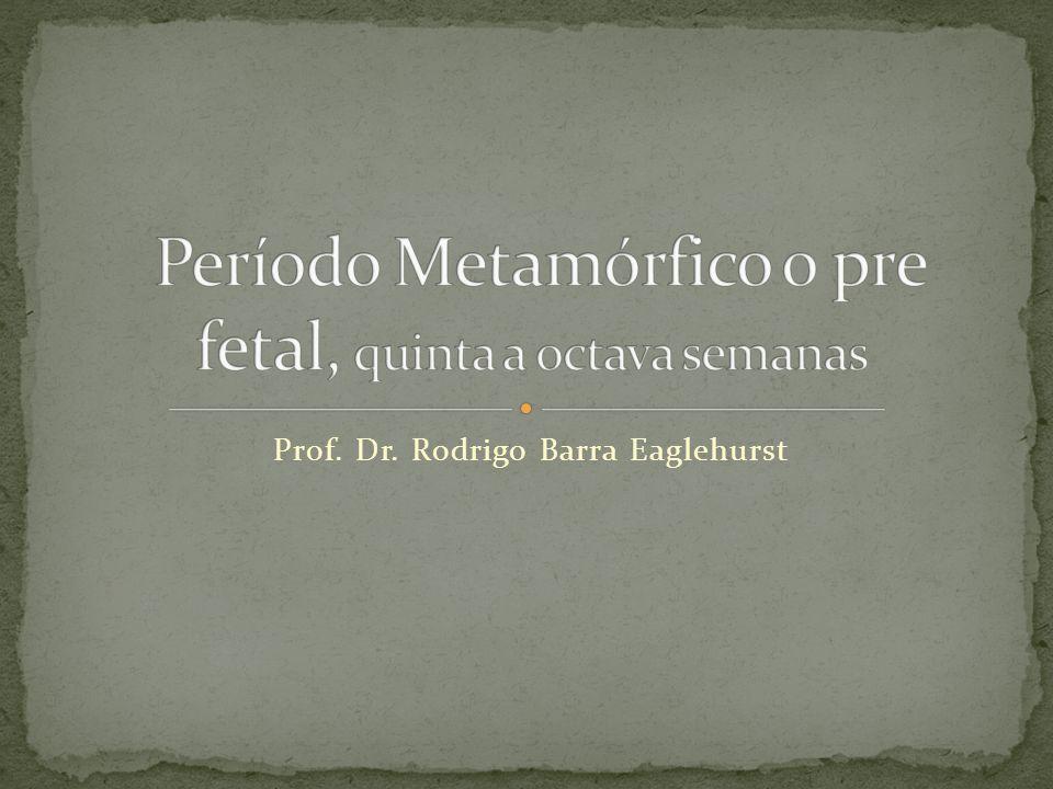 Prof. Dr. Rodrigo Barra Eaglehurst