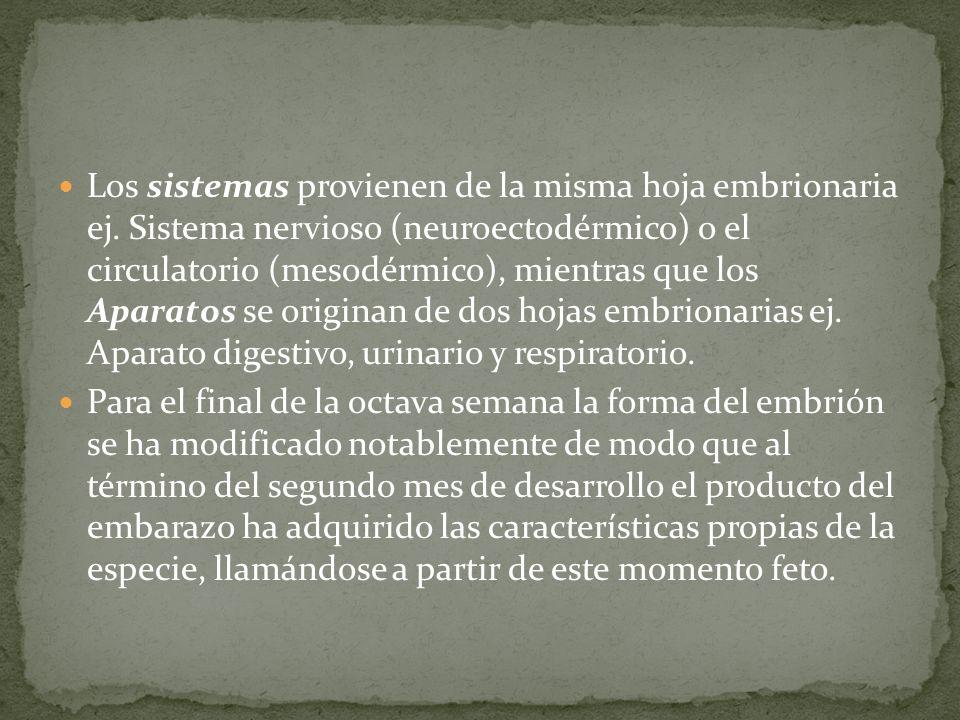 Los sistemas provienen de la misma hoja embrionaria ej. Sistema nervioso (neuroectodérmico) o el circulatorio (mesodérmico), mientras que los Aparatos