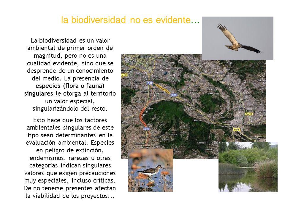la biodiversidad no es evidente… La biodiversidad es un valor ambiental de primer orden de magnitud, pero no es una cualidad evidente, sino que se des