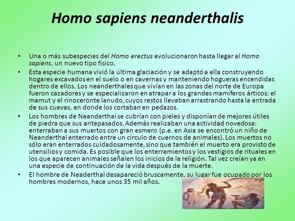 Homo sapiens sapiens Después del Neanderthal vino el Homo sapiens sapiens, que es la especie a la cual pertenecemos los seres humanos modernos.