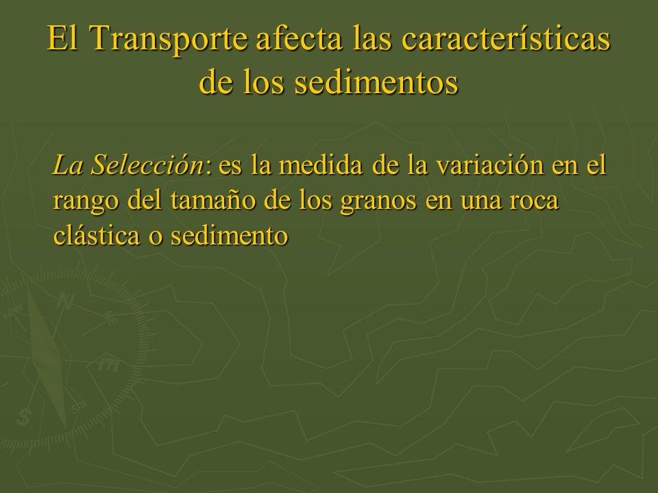 El Transporte afecta las características de los sedimentos La Selección: es la medida de la variación en el rango del tamaño de los granos en una roca