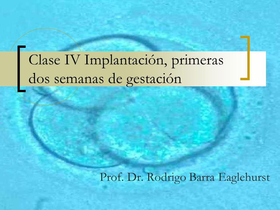 Clase IV Implantación, primeras dos semanas de gestación Prof. Dr. Rodrigo Barra Eaglehurst