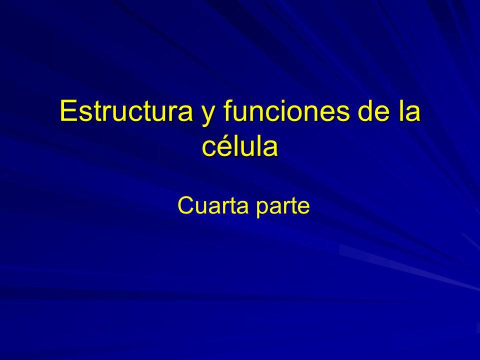 Estructura y funciones de la célula Cuarta parte