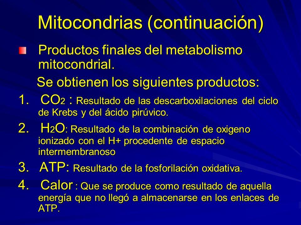 Mitocondrias (continuación) Productos finales del metabolismo mitocondrial. Se obtienen los siguientes productos: Se obtienen los siguientes productos