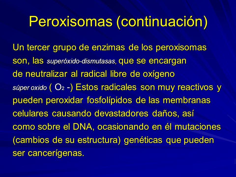 Peroxisomas (continuación) El radical superóxido (O 2 -) se origina en las mitocondrias, organelos celulares productores de energía, mediante reacciones oxidativas y de reducción, para luego ser eliminados en los peroxisomas mediante la acción de las superoxido - dismutasas a través de la reacción: 2O 2 - + 2H + H 2 O 2 + O 2.