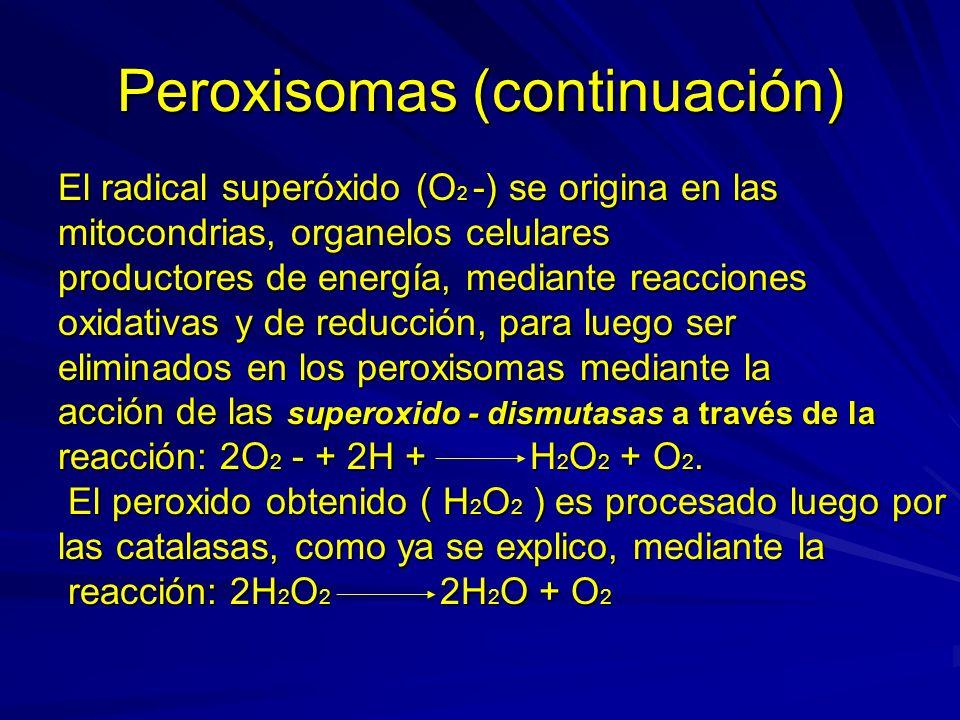Peroxisomas (continuación) Parte del H 2 O 2 que se origina en los peroxisomas como resultado de la neutralización del radical O 2 -, es utilizado para destoxificar muchas sustancias químicas, tales como medicamentos y otros tóxicos exógenos, según la reaccion: H 2 O 2 + TH 2 ( tóxico ) 2H 2 O + T ( atóxico )