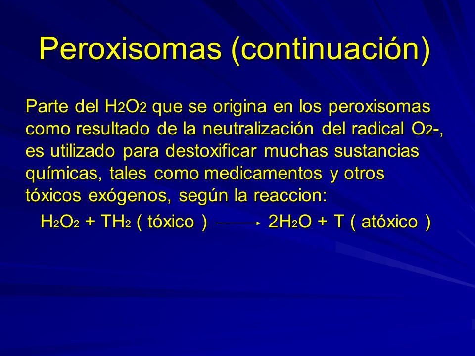 Peroxisomas (continuación) Parte del H 2 O 2 que se origina en los peroxisomas como resultado de la neutralización del radical O 2 -, es utilizado par