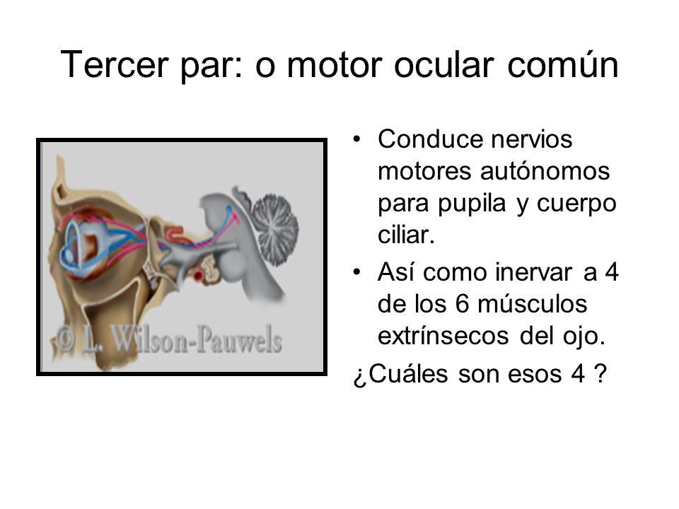 Tercer par: o motor ocular común Conduce nervios motores autónomos para pupila y cuerpo ciliar. Así como inervar a 4 de los 6 músculos extrínsecos del