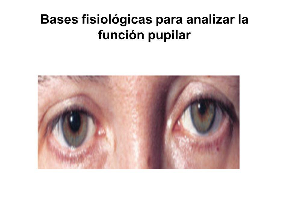 Bases fisiológicas para analizar la función pupilar