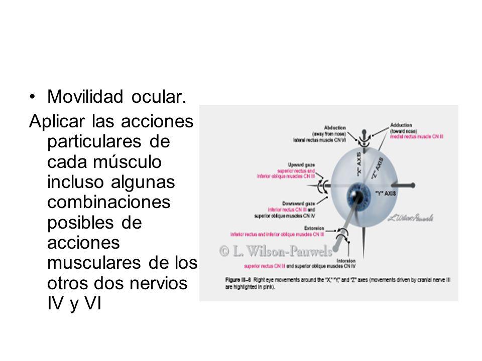 Movilidad ocular. Aplicar las acciones particulares de cada músculo incluso algunas combinaciones posibles de acciones musculares de los otros dos ner