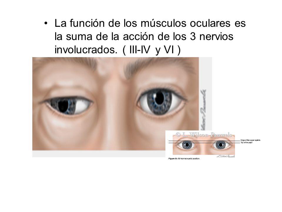 La función de los músculos oculares es la suma de la acción de los 3 nervios involucrados. ( III-IV y VI )