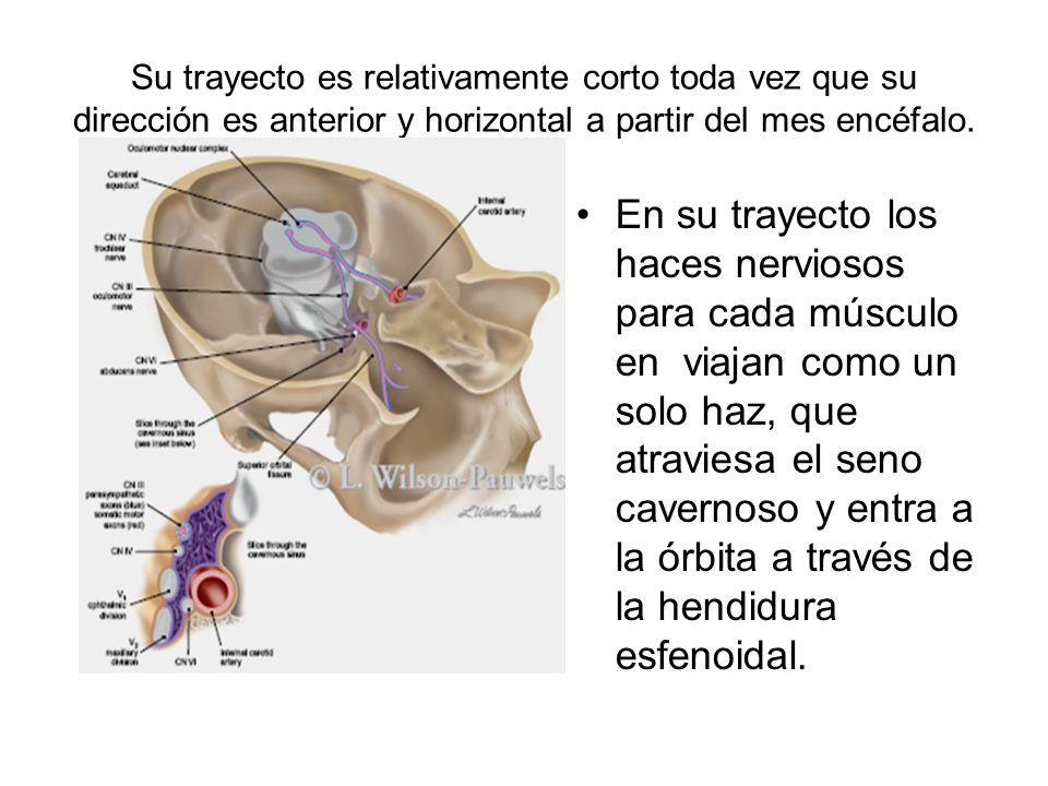 En resumen oculomotor: 1.Motilidad extrínseca del ojo: a) Abertura palpebral (III par).