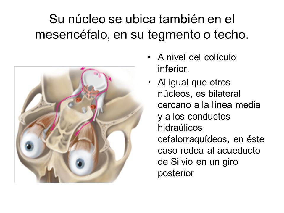 Su núcleo se ubica también en el mesencéfalo, en su tegmento o techo. A nivel del colículo inferior. Al igual que otros núcleos, es bilateral cercano