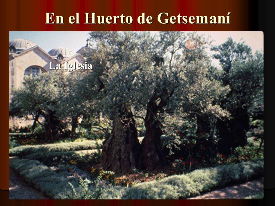 Iglesia de las Naciones en el Huerto de Getsemaní (Tomada del muro, con telefoto)