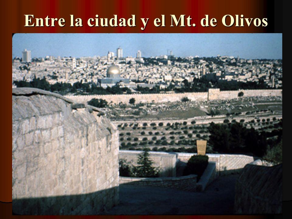 Entre la ciudad y el Mt. de Olivos