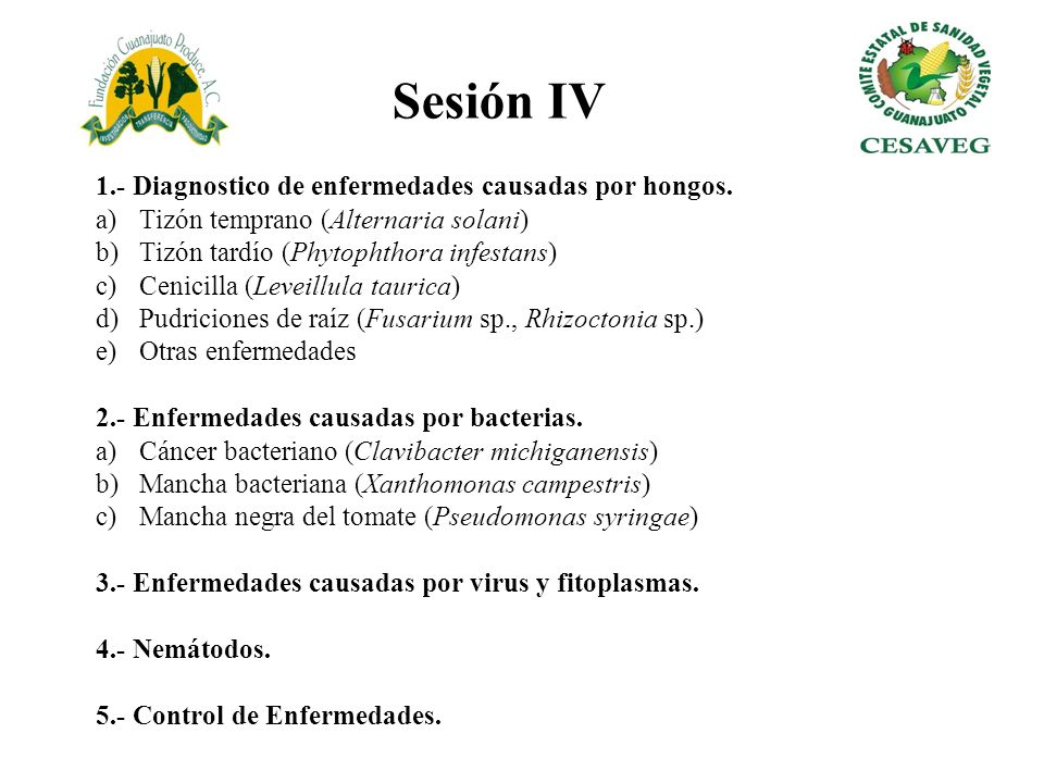 1.- Diagnostico de enfermedades causadas por hongos. a)Tizón temprano (Alternaria solani) b)Tizón tardío (Phytophthora infestans) c)Cenicilla (Leveill