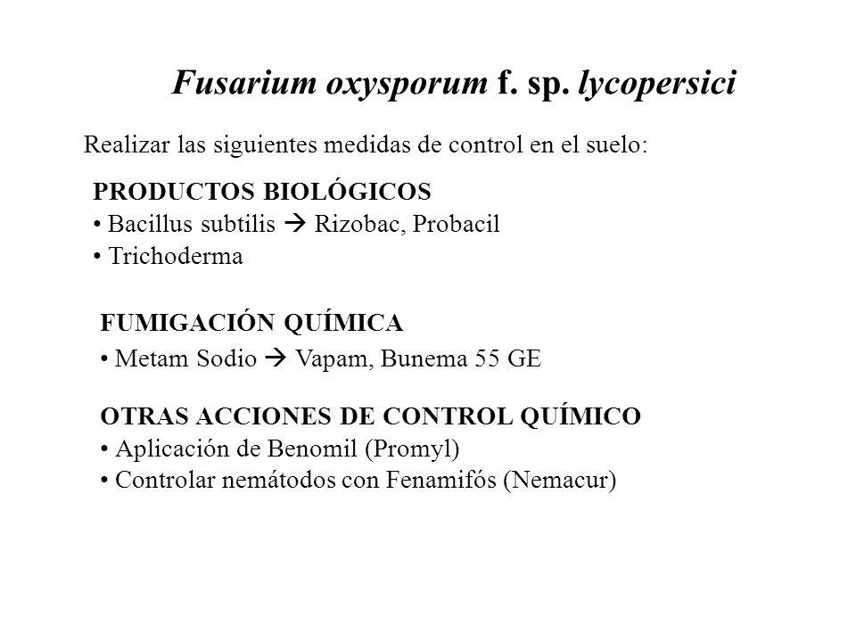 Fusarium oxysporum f. sp. lycopersici Realizar las siguientes medidas de control en el suelo: PRODUCTOS BIOLÓGICOS Bacillus subtilis Rizobac, Probacil