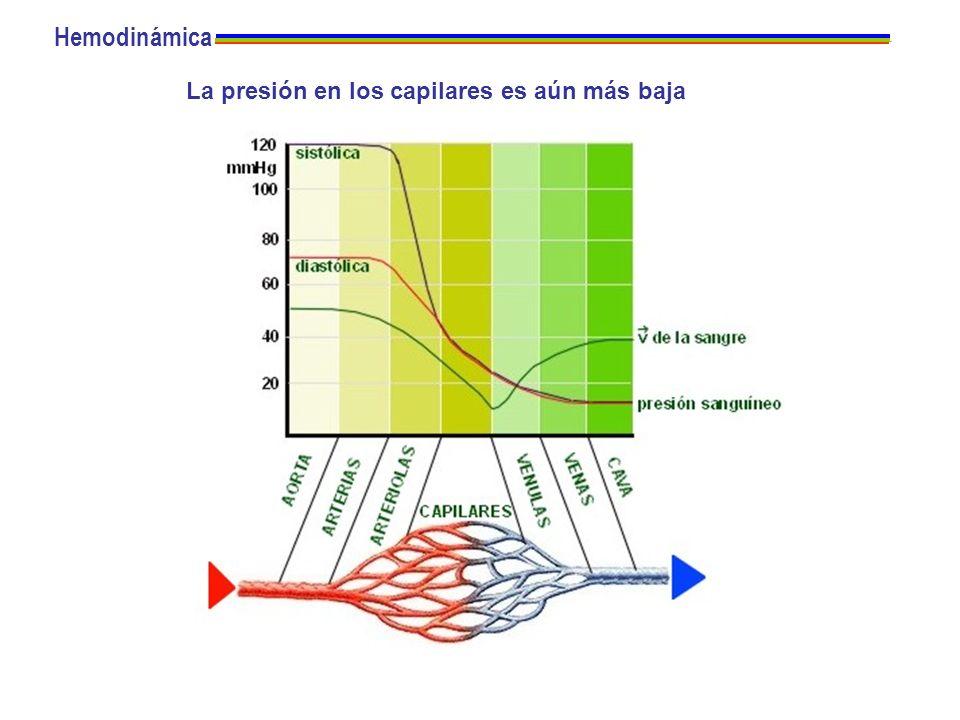 La presión en los capilares es aún más baja Hemodinámica