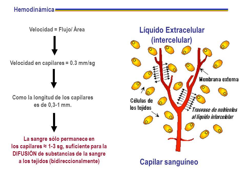 Hemodinámica Velocidad = Flujo/ Área Velocidad en capilares = 0.3 mm/sg Como la longitud de los capilares es de 0,3-1 mm. La sangre sólo permanece en