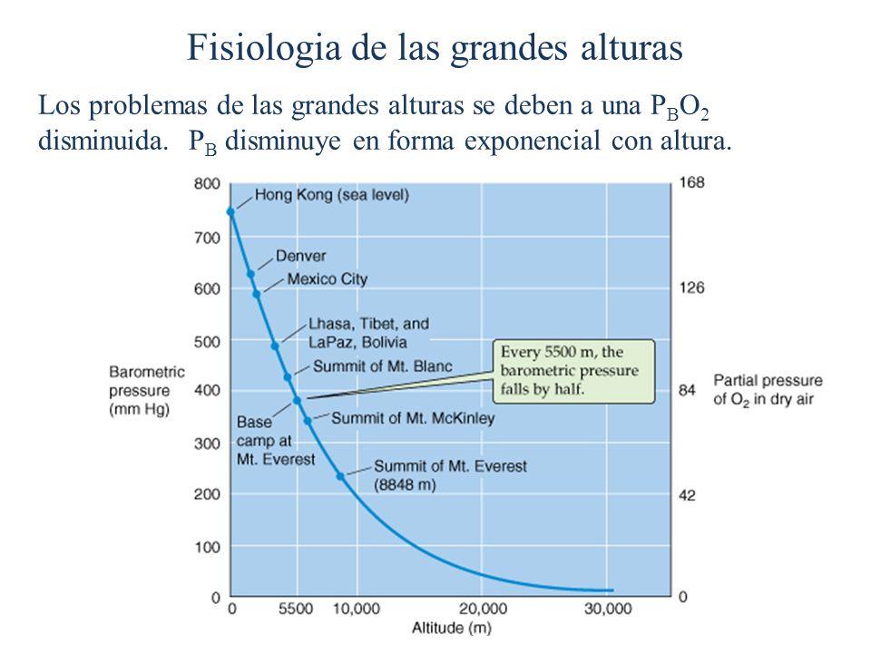 Fisiologia de las grandes alturas Los problemas de las grandes alturas se deben a una P B O 2 disminuida. P B disminuye en forma exponencial con altur