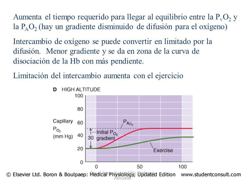 Aumenta el tiempo requerido para llegar al equilibrio entre la P v O 2 y la P A O 2 (hay un gradiente disminuido de difusión para el oxígeno) Intercam