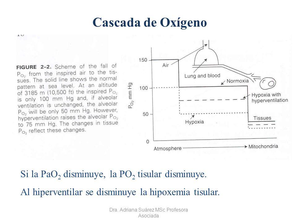 Cascada de Oxígeno Si la PaO 2 disminuye, la PO 2 tisular disminuye. Al hiperventilar se disminuye la hipoxemia tisular. Dra. Adriana Suárez MSc Profe