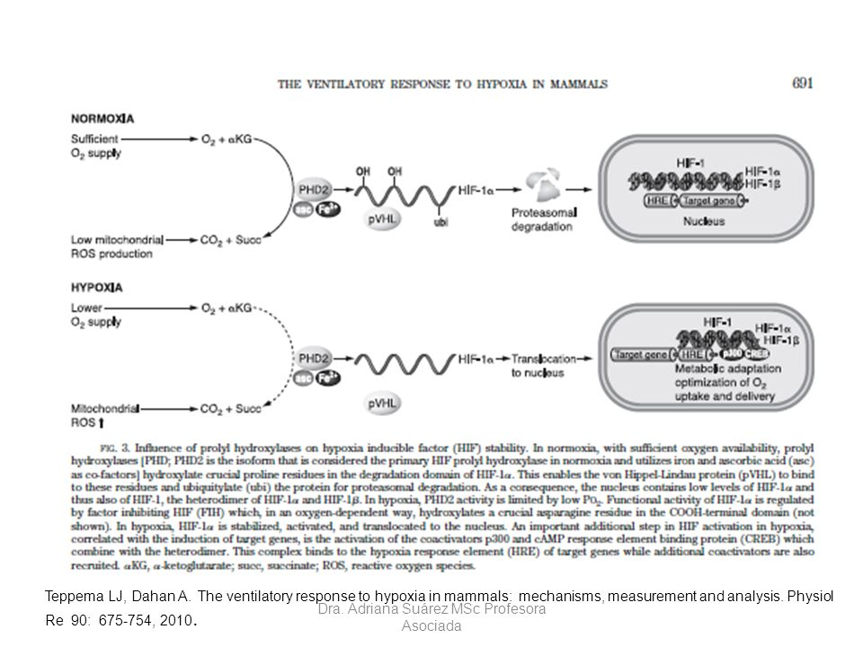 Teppema LJ, Dahan A. The ventilatory response to hypoxia in mammals: mechanisms, measurement and analysis. Physiol Re 90: 675-754, 2010. Dra. Adriana