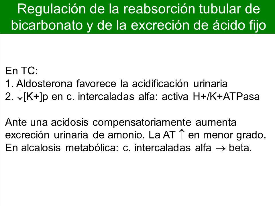 Regulación de la reabsorción tubular de bicarbonato y de la excreción de ácido fijo En TC: 1. Aldosterona favorece la acidificación urinaria 2. [K+]p