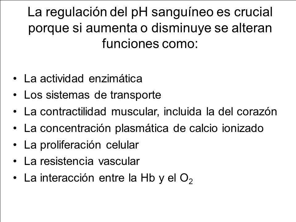 La regulación del pH sanguíneo es crucial porque si aumenta o disminuye se alteran funciones como: La actividad enzimática Los sistemas de transporte
