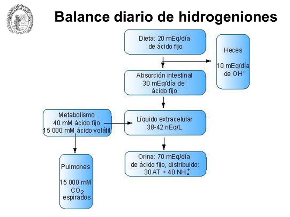 Balance diario de hidrogeniones