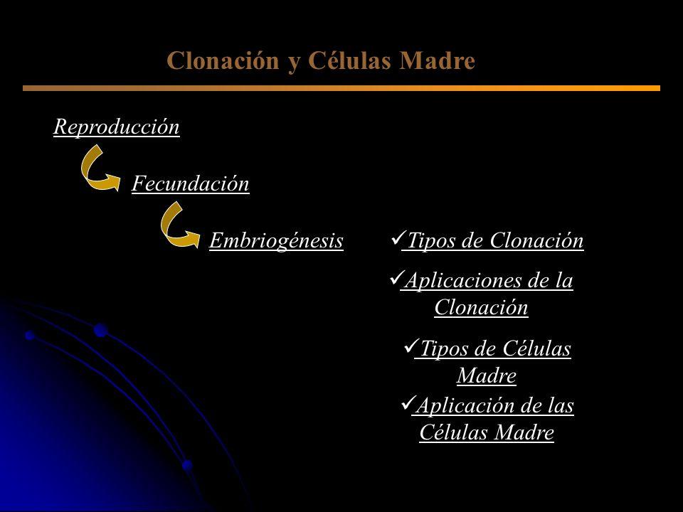 Clonación y Células Madre Reproducción Embriogénesis Fecundación Tipos de Clonación Aplicaciones de la Clonación Tipos de Células Madre Aplicación de