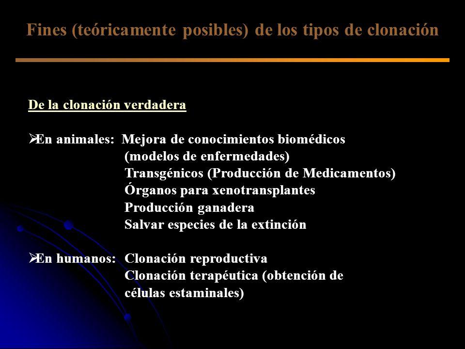 De la clonación verdadera En animales: Mejora de conocimientos biomédicos (modelos de enfermedades) Transgénicos (Producción de Medicamentos) Órganos