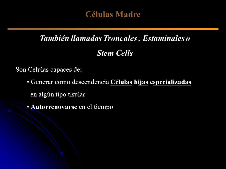 También llamadas Troncales, Estaminales o Stem Cells Son Células capaces de: Generar como descendencia Células hijas especializadas en algún tipo tisu